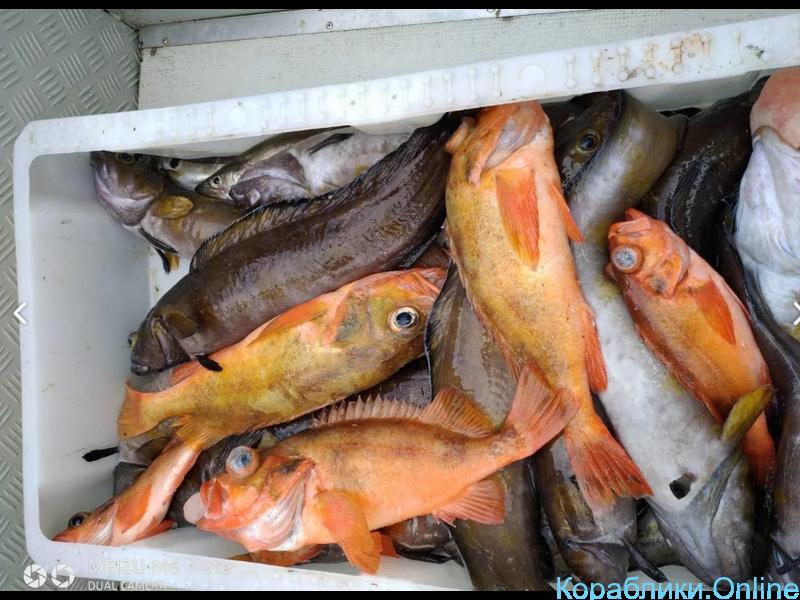 Морская рыбалка, прогулки, заброс групп - 2/2