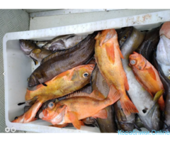 Морская рыбалка, прогулки, заброс групп - Изображение 2/2