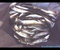 Морская рыбалка с гарантированным уловом - Изображение 4/4