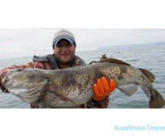 Рыбалка, морские прогулки, туры на Камчатке