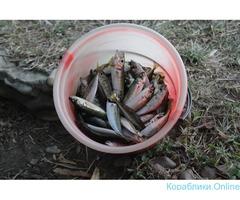 Морская рыбалка в пос. Архипо-Осиповка