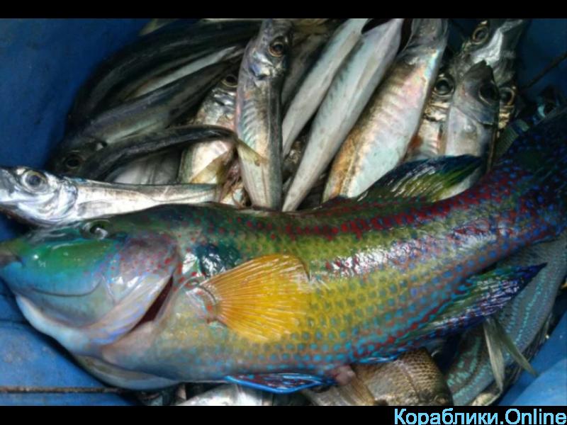 Рыбалка VIP, морские прогулки - 2/3