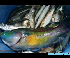 Рыбалка VIP, морские прогулки