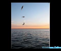 Рыбалка, морские прогулки - Изображение 3/8