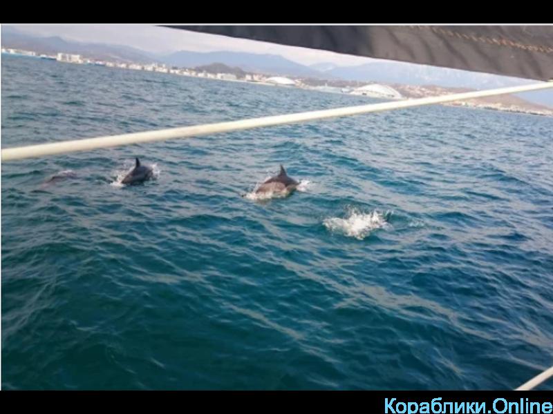 Прогулки по морю на яхте. Встреча с дельфинами - 5/6