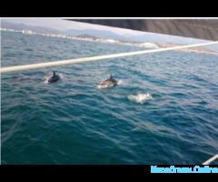 Прогулки по морю на яхте. Встреча с дельфинами - Изображение 5/6
