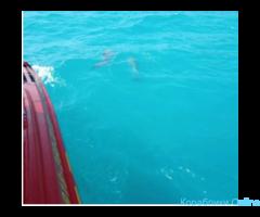 Морские экскурсии, рыбалка на Черном море
