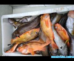 Морская рыбалка, прогулки, заброс групп