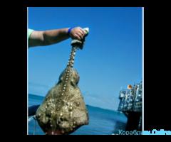 Рыбалка и морские прогулки в Анапе