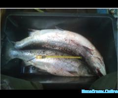 Морская рыбалка в Kалининграде