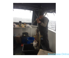 Рыбалка в Баренцевом море без посредников