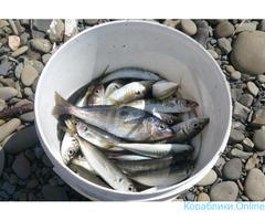 Рыбалка в море с катера