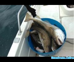 Морская рыбалка 2 катера группы от 3-8 человек
