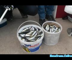 Рыбалка в открытом море. В любое время года - Изображение 3/8