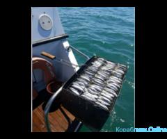 Рыбалка морская и аренда яхт